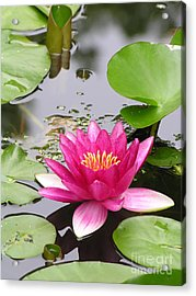 Pink Lily Flower  Acrylic Print by Diane Greco-Lesser
