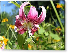 Pink Lily Acrylic Print by Theresa Willingham