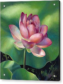 Pink Lotus Water Lily Acrylic Print by Nancy Tilles
