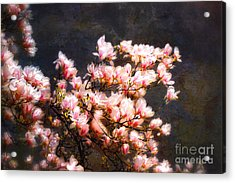 Pink Magnolias Acrylic Print by Elaine Manley