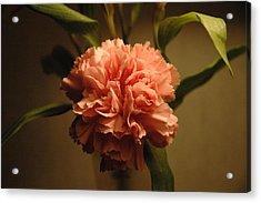 Pink Marigold Flower Acrylic Print by Rafael Figueroa