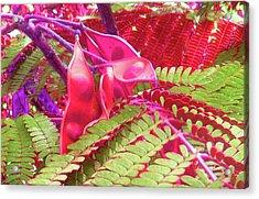 Pink Mimosa Acrylic Print by Juliana  Blessington