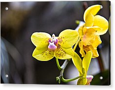 Pink On Yellow Acrylic Print