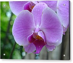 Acrylic Print featuring the photograph Pink Orchid by Charles and Melisa Morrison