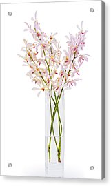 Pink Orchid In Vase Acrylic Print by Atiketta Sangasaeng