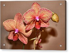 Pink Orchid2 Acrylic Print