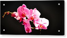 Acrylic Print featuring the photograph Pink Orchids At A Party by Ronda Broatch