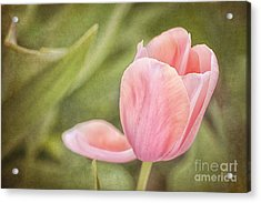 Acrylic Print featuring the photograph Pink Passion by Cheryl Davis