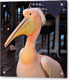 Pink Pelican Acrylic Print