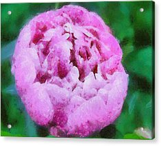 Acrylic Print featuring the painting Pink Peony by Elizabeth Coats