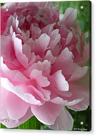 Pink Peony Acrylic Print by Penny Hunt