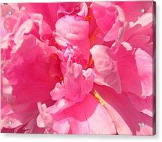 Pink Peony Acrylic Print by Tina Ann Byers
