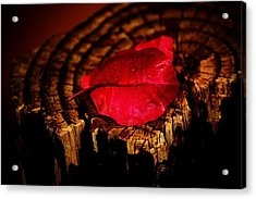Acrylic Print featuring the photograph Pink Petal by Jessica Shelton