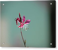 Acrylic Print featuring the photograph Pink Petals by Bonnie Muir
