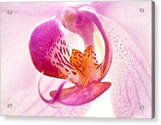 Pink Phalaenopsis Acrylic Print