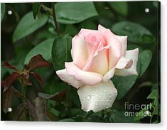 Acrylic Print featuring the photograph Pink Promise by Living Color Photography Lorraine Lynch