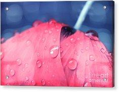 Pink Puppie Acrylic Print by Soultana Koleska