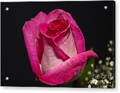 Acrylic Print featuring the photograph Pink Rose by Michael Waters