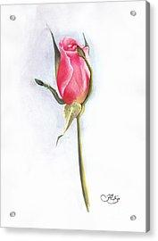 Pink Rose Acrylic Print by Muna Abdurrahman