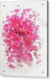 Pink Rose Acrylic Print by Rachel Christine Nowicki