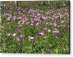 Pink Spring Flowers Acrylic Print