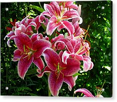 Pink Tiger Lilies Acrylic Print by Kathy Long