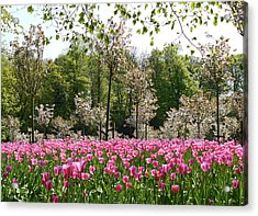 Pink Tulips And Blossom 2 Acrylic Print