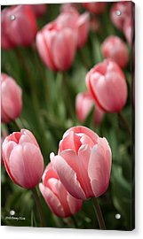 Acrylic Print featuring the photograph Pink Tulips by Penny Hunt