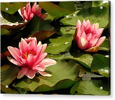 Pink Water Lilies Acrylic Print by Design Windmill