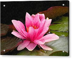 Pink Water Lily Acrylic Print by Design Windmill