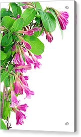 Acrylic Print featuring the photograph Pink Weigela Postcard by Aleksandr Volkov