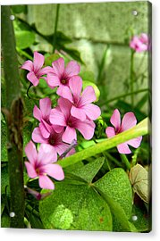 Acrylic Print featuring the photograph Pink Wild Flowers by Ester  Rogers