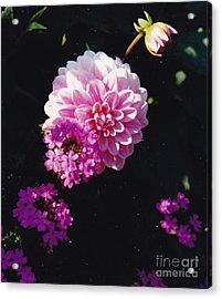 Pinkish Purplish Acrylic Print