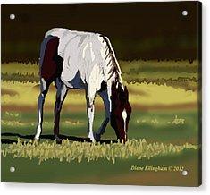 Pinto Picnic Acrylic Print