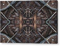 Pinus Strobus Acrylic Print by Ed Kelley