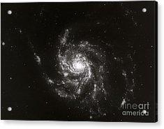 Pinwheel Galaxy, M101 Acrylic Print by Science Source
