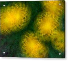 Pirouetting Dandelions Acrylic Print by Neil Shapiro