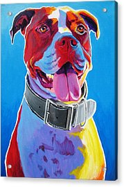 Pit Bull - Buster Acrylic Print by Alicia VanNoy Call