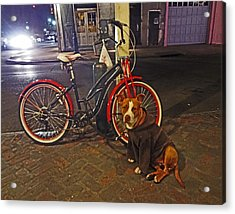 Pit Bull In A Hoodie In The French Quarter Of New Orleans Acrylic Print