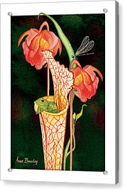 Acrylic Print featuring the painting Pitcher Plant With Blooms by Anne Beverley-Stamps