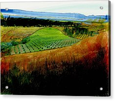 Plain De Rousette Acrylic Print by David Bates