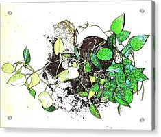 Acrylic Print featuring the mixed media Plant Falls by YoMamaBird Rhonda
