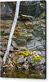 Plant Life On Rocky Canadian Lake Shore Acrylic Print by Gordon Wood