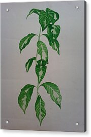 Plant Acrylic Print by Shilpa V N