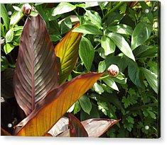 Plants Acrylic Print