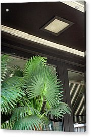 Acrylic Print featuring the photograph Plastic Palms And Striped Awnings by Louis Nugent