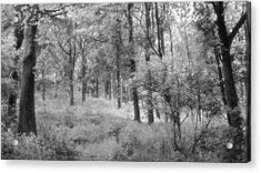 Platinum Forest Acrylic Print by Sarah Couzens