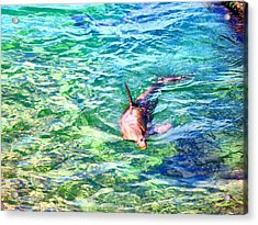 Playful Dolphin Acrylic Print by Jose Lopez