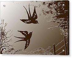 Playful Swalows Digital Art Acrylic Print by Georgeta  Blanaru