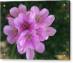 Acrylic Print featuring the photograph Playful by Tina Marie